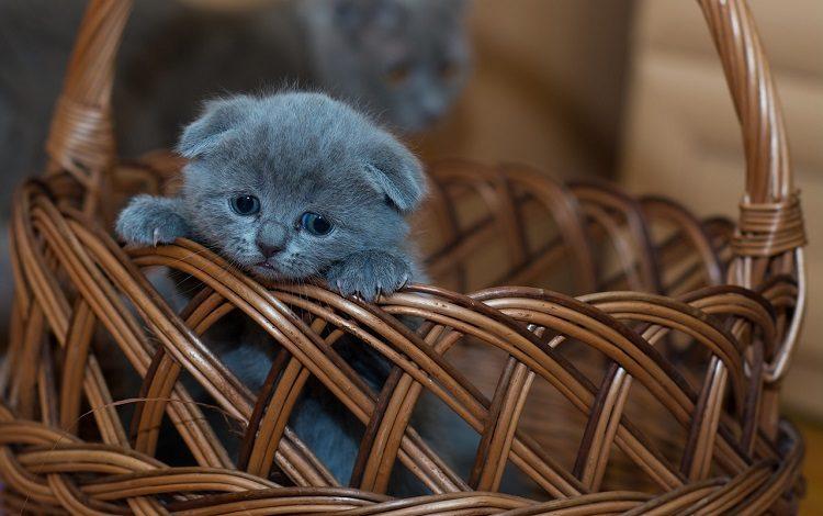 Kedilerin-Dis-Gelisimi