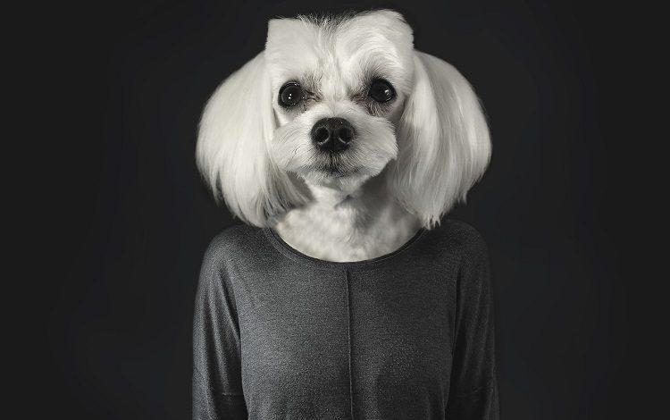 köpeklerde davranış sorunları