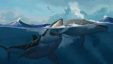 megalodon köpek balığı, megalodon köpekbalığı, megalodon hala var mı, köpek balığı megalodon, megalodon belgeseli, megalodon kaç metre, megalodon dişi