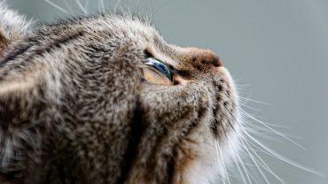 kedi maması önemi