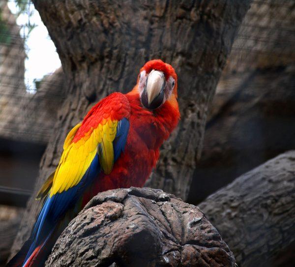 papağan fotoğrafları