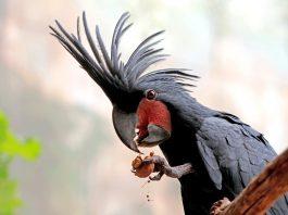 papağan resimleri, papağan fotoğrafları, en güzel papağan resimleri