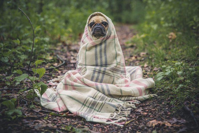 tatlı köpek cinsleri, tatlı köpekler, en tatlı köpekler, dünyanın en tatlı köpeği, dünyanın en güzel köpeği, en tatlı köpek cinsleri, dünyanın en tatlı köpekleri, sevimli köpek cinsleri, en şirin köpekler