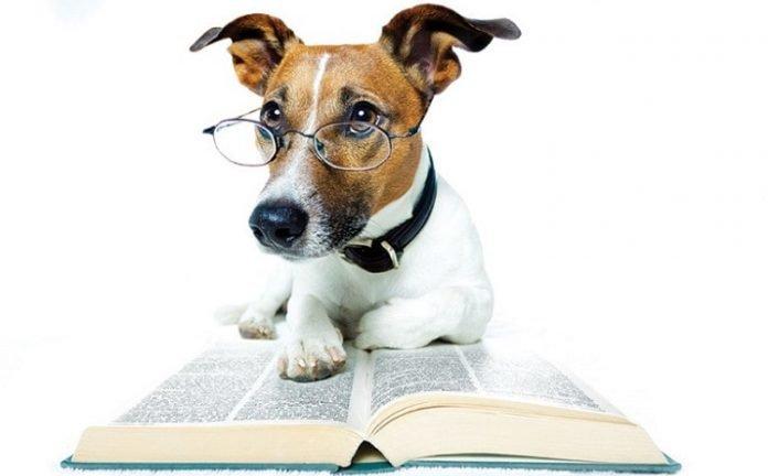 en zeki köpek cinsleri, en zeki köpek cinsi, en akıllı köpek cinsi, dünyanın en akıllı köpeği, akıllı köpek cinsleri