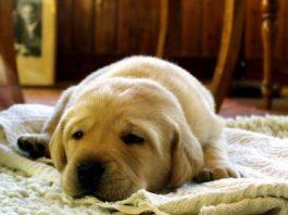 evde beslenebilecek köpekler, apartmanda beslenebilecek köpekler, evde beslenecek köpek cinsleri, evde bakılacak köpek cinsleri, evde beslenen köpekler, evde bakılabilecek köpekler, evde bakılacak köpekler, apartmanda beslenebilecek köpek cinsleri, evde beslenecek köpek türleri, evde beslenecek en iyi köpek, evde bakılabilecek köpek türleri, evde beslenebilecek küçük köpekler, havlamayan köpek