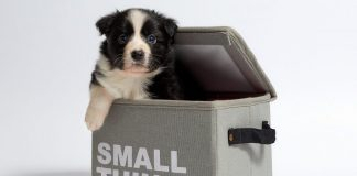 küçük köpek cinsleri, küçük köpekler, büyümeyen köpek cinsleri, minik köpekler, küçük ırk köpekler, küçük köpek ırkları, küçük köpek türleri