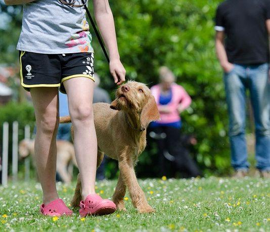 Köpek Eğitimi Veren Kurumlar